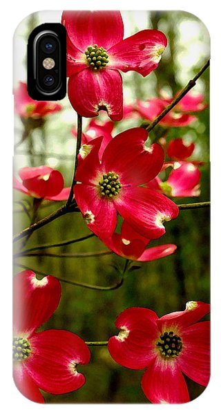 Dogwood Blooms In The Spring IPhone Case