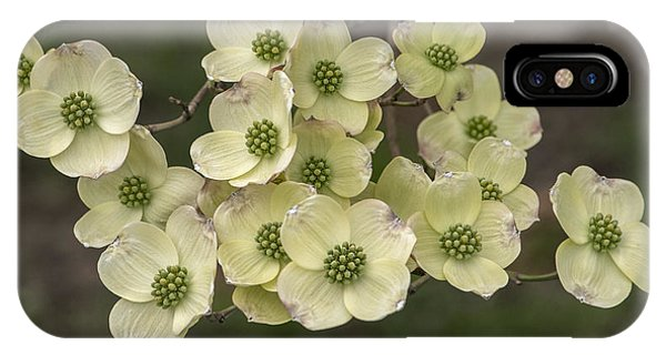 Dogwood Dance In White IPhone Case