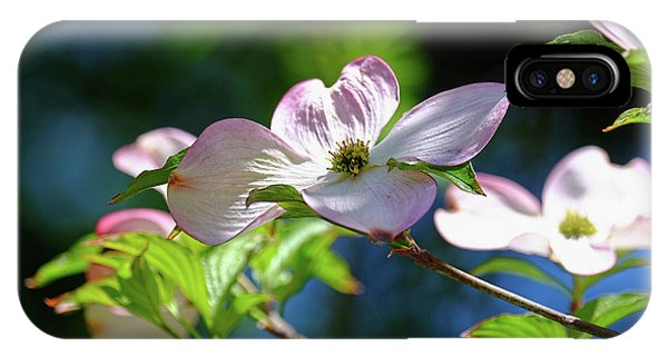 Dogwood Flowers IPhone Case