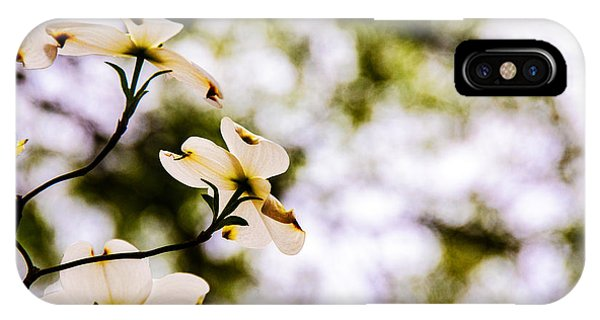 Dogwoods Under The Pines IPhone Case