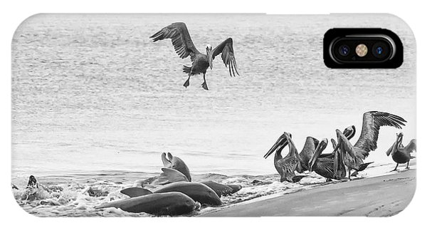 Dolphin And Pelican Party IPhone Case