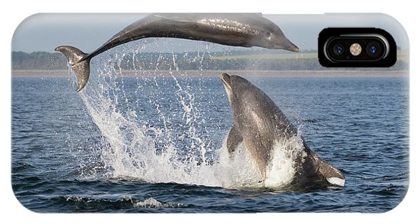 Dolphins Having Fun IPhone Case