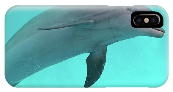 Dolphin iPhone Case - Dolphin by Sandy Keeton