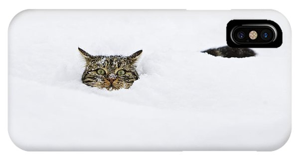 Mp iPhone Case - Domestic Cat Felis Catus In Deep Snow by Konrad Wothe