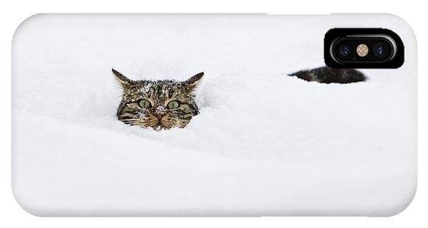 Domestic Cat Felis Catus In Deep Snow IPhone Case