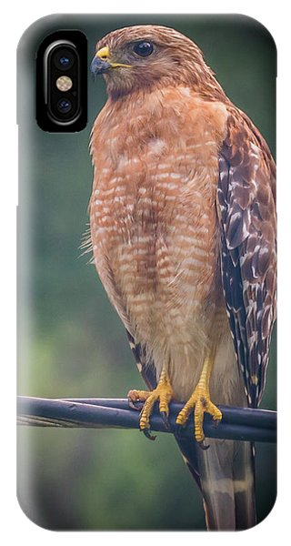 IPhone Case featuring the photograph Dominique The Hawk by Michael Sussman