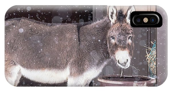 Donkey Watching It Snow IPhone Case