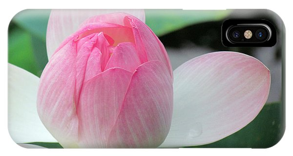 Dotus On The Lotus  IPhone Case
