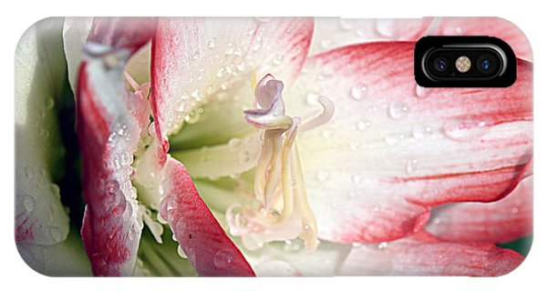 Double Amaryllis IPhone Case