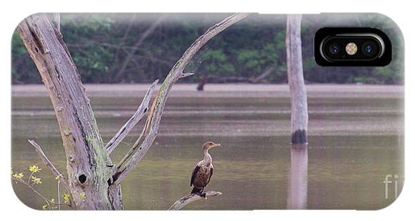 Lake Juliette iPhone Case - Double Crested Cormorant by Donna Brown