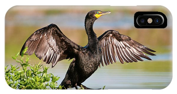 Double-crested Cormorant IPhone Case