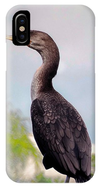 Double Crested Cormorant IPhone Case
