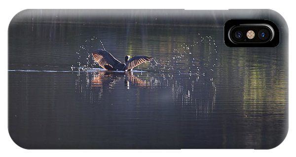 IPhone Case featuring the photograph Double Crested Cormorant by Margarethe Binkley