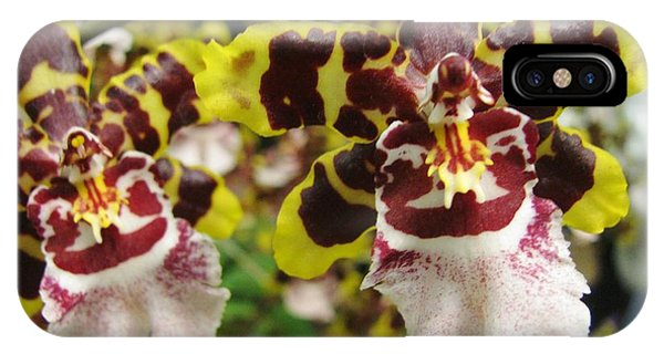 Double Odontoglossum Orchid IPhone Case