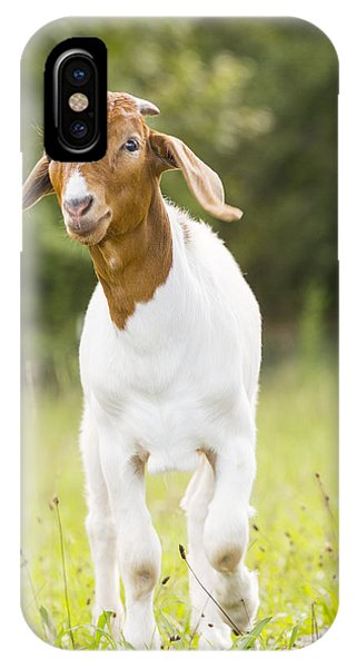Dougie The Goat IPhone Case