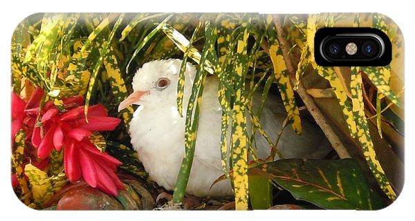Dove In Jamaica IPhone Case