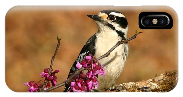 Downy Woodpecker In Spring IPhone Case