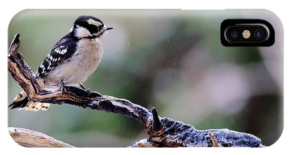 Downy Woodpecker With Snow IPhone Case