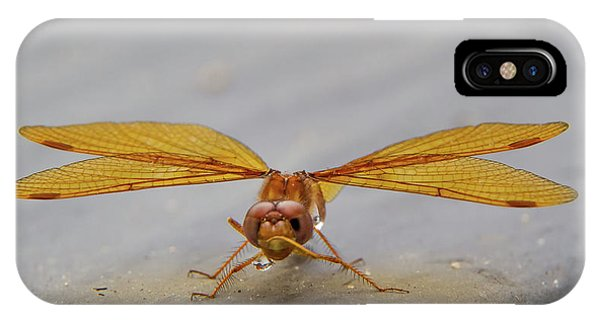 Dragon Fly Hanging Around IPhone Case