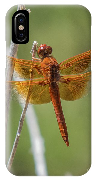 Dragonfly 10 IPhone Case