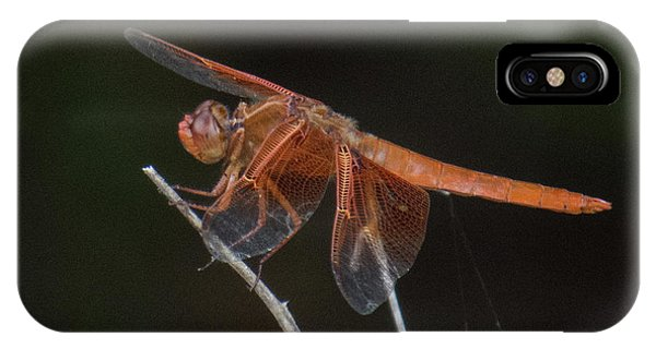 Dragonfly 11 IPhone Case