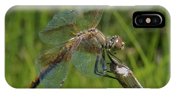 Dragonfly 8 IPhone Case