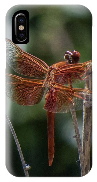Dragonfly 9 IPhone Case