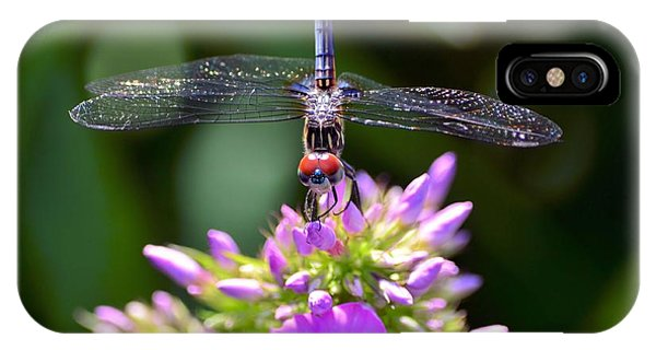 Dragonfly And Phlox IPhone Case