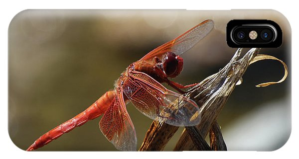 Dragonfly Closeup 1 Phone Case by Richard Stephen