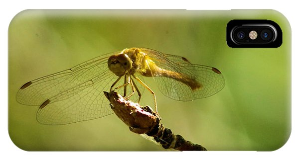 Little Things iPhone Case - Dragonfly Perched by Jeff Swan