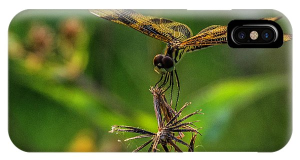 Dragonfly Resting On Flower IPhone Case
