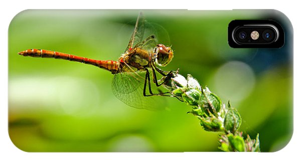 Dragonfly Sitting On Flower IPhone Case