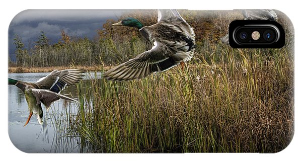 Drake Mallard Ducks Coming In For A Landing IPhone Case
