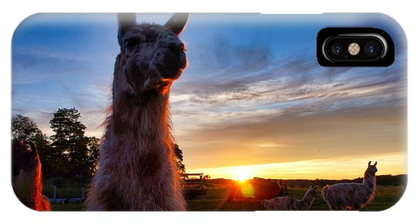 Drama Llamas IPhone Case
