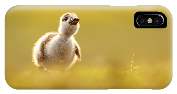 Goslings iPhone Case - Dream Duckie _egyptian Gosling by Roeselien Raimond