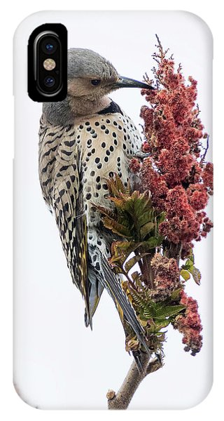 Northern Flicker iPhone Case - Dress To Kill by Everet Regal