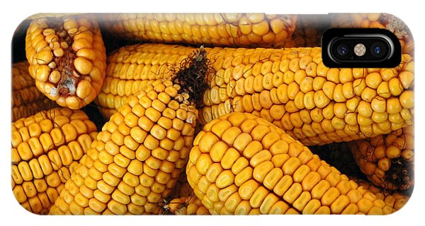 Dried Corn Cobs IPhone Case