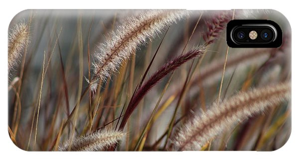 Dried Desert Grass Plumes In Honey Brown IPhone Case