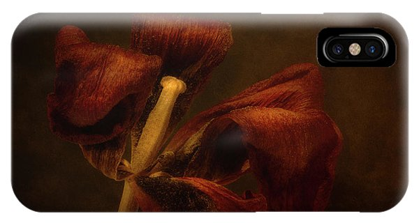 Tulip iPhone X / XS Case - Dried Tulip Blossom 2 by Scott Norris