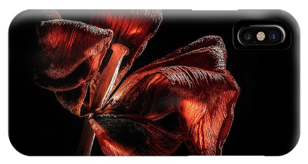Tulip iPhone X Case - Dried Tulip Blossom by Scott Norris