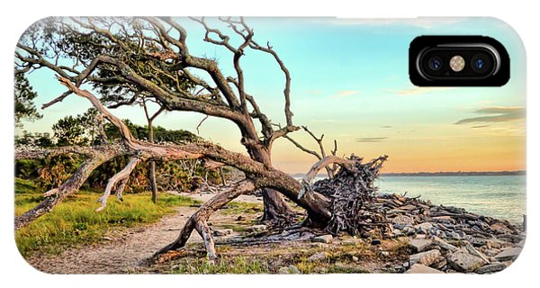 Driftwood Beach Morning 2 IPhone Case