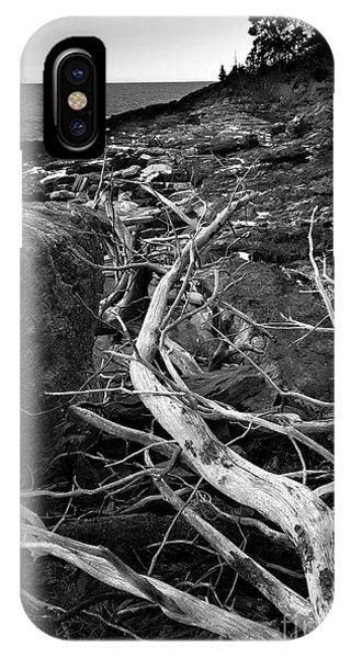 Driftwood Tree, La Verna Preserve, Bristol, Maine  -20999-30003 IPhone Case