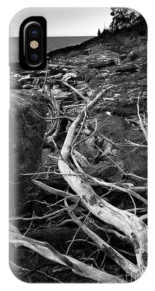 Driftwood Tree, La Verna Preserve, Bristol, Maine  -20999-30003 IPhone Case