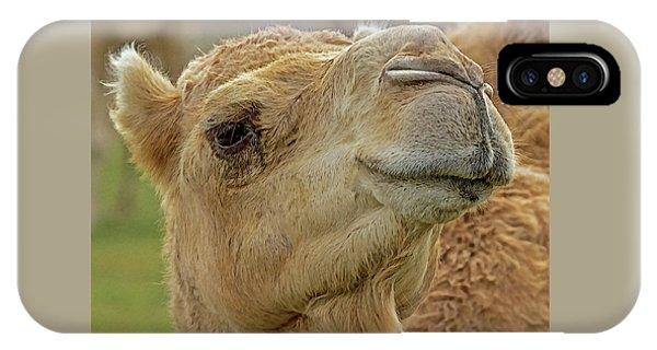 Dromedary Or Arabian Camel IPhone Case
