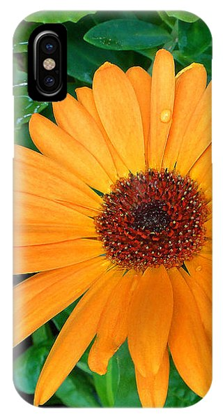 Droplets On A Daisy IPhone Case