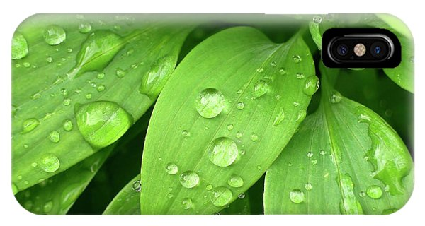 Raining iPhone Case - Drops On Leaves by Carlos Caetano