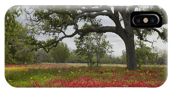 Drummonds Phlox Meadow Near Leming Texas IPhone Case