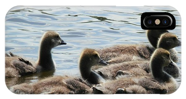 Duck Babies On The Water IPhone Case