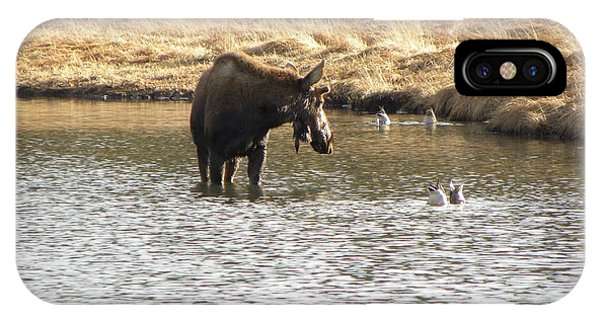 Ducks - Moose Rollinsville Co IPhone Case
