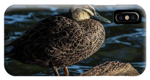 Duck On A Log IPhone Case
